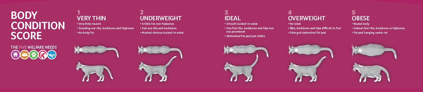 Obesity In Cats Pdsa