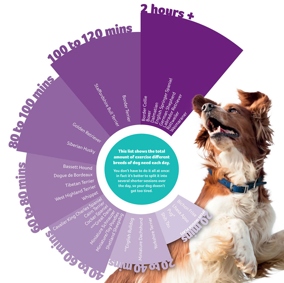 How Much Exercise Does My Dog Need Each Day