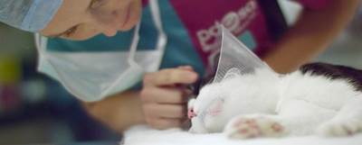 Vet checks on cat during surgery