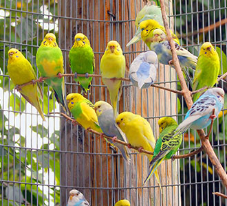 Giving your budgie the ideal home - PDSA