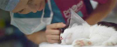 A PDSA vet looking after a white and black kitten