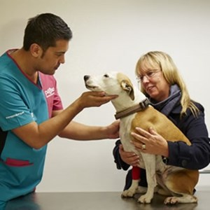 A dog gets a check up from a PDSA vet