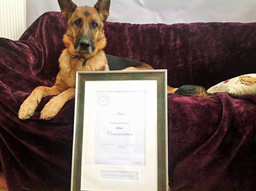 Inca the German Shepherd with her PDSA Commendation