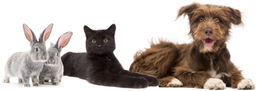 photo of rabbit, cat and dog on white background