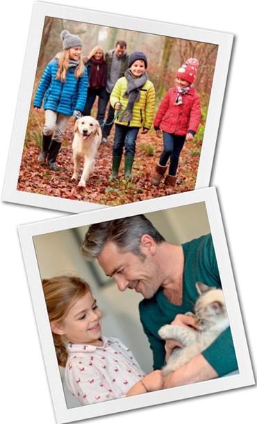 Pet Insurance Guide Pdsa