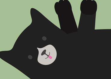 cat behaviour guide  pdsa