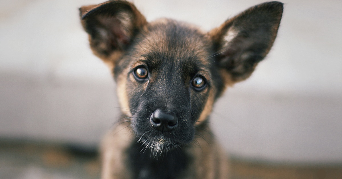 The cost of owning a dog - PDSA