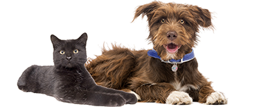photo of dog and a cat on white background