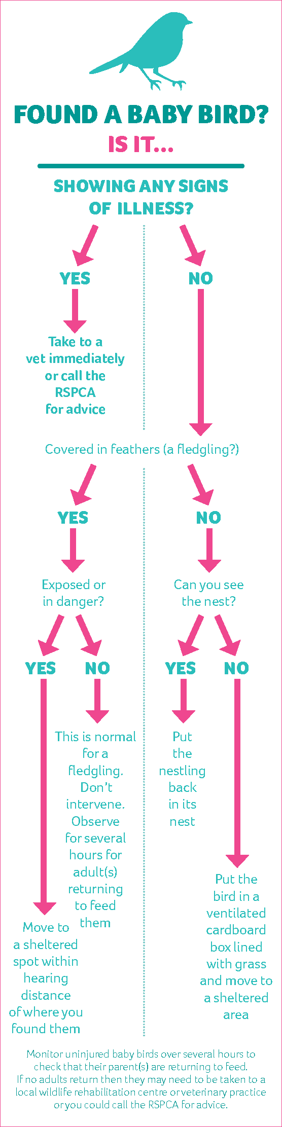 Infographic showing what to do if you find a baby bird