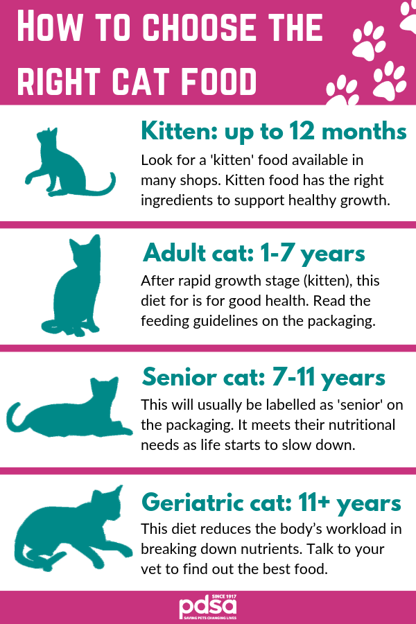 The Best Diet For Your Cat Pdsa