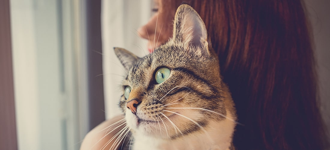 Tabby cat in woman's arms looking out of window