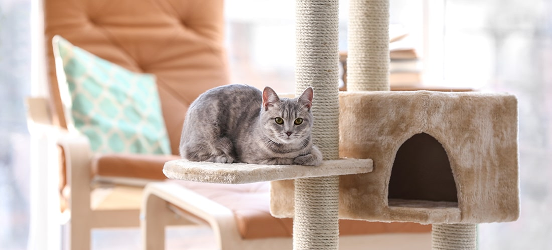 Photo of a cat on a scratching post
