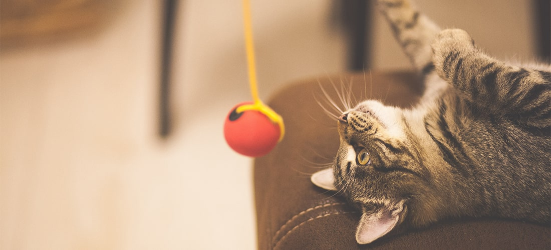 Photo of a cat playing with a ball