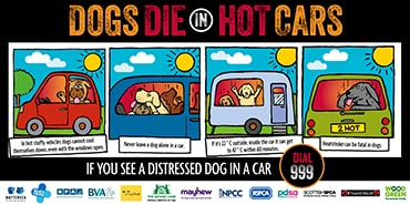 Dogs die in hot cars illustration