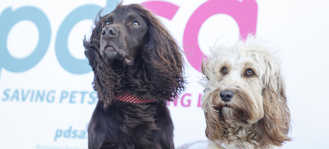 Two dogs in front of PDSA sign