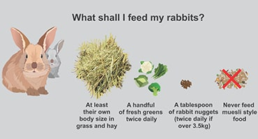 Infographic showing what to feed rabbits