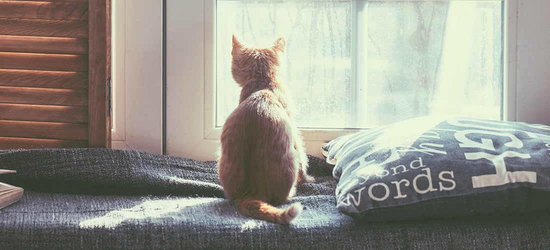 Ginger kitten looking out of window