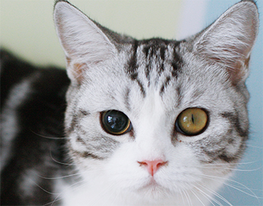 Photo of cat who is blind in one eye