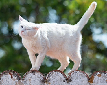 White cat shaking their head