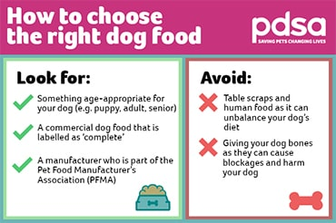 Infographic explaining how to choose the right dog food