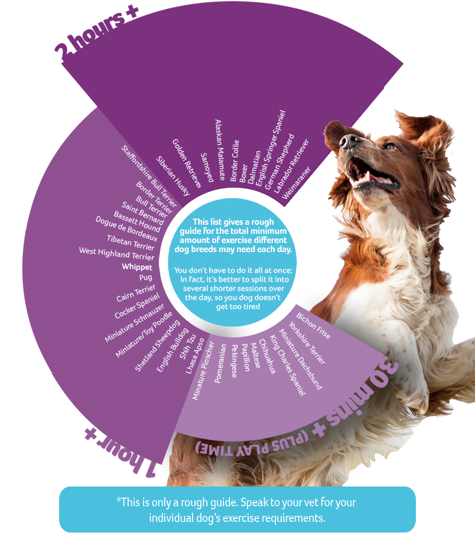 How Much Exercise Does Your Dog Need Pdsa