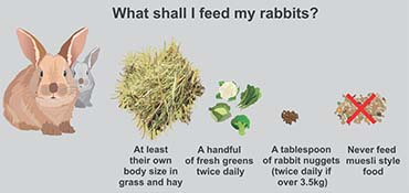 Illustration showing what to feed a rabbit.