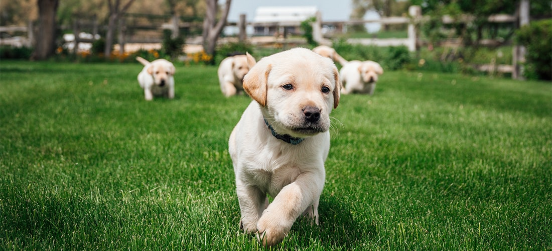 a group of cute puppies exercising outside