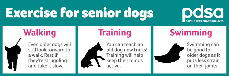Infographic shows older dogs can benefit from gentle walks, training to keep their brain active and swimming for their joints