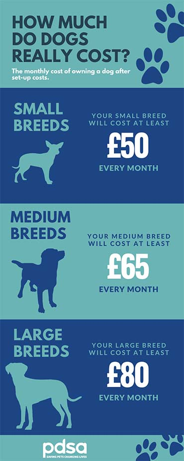 Monthly cost of owning a dog infographic