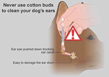 Illustration showing how cotton wool buds can make ear problems worse in dogs