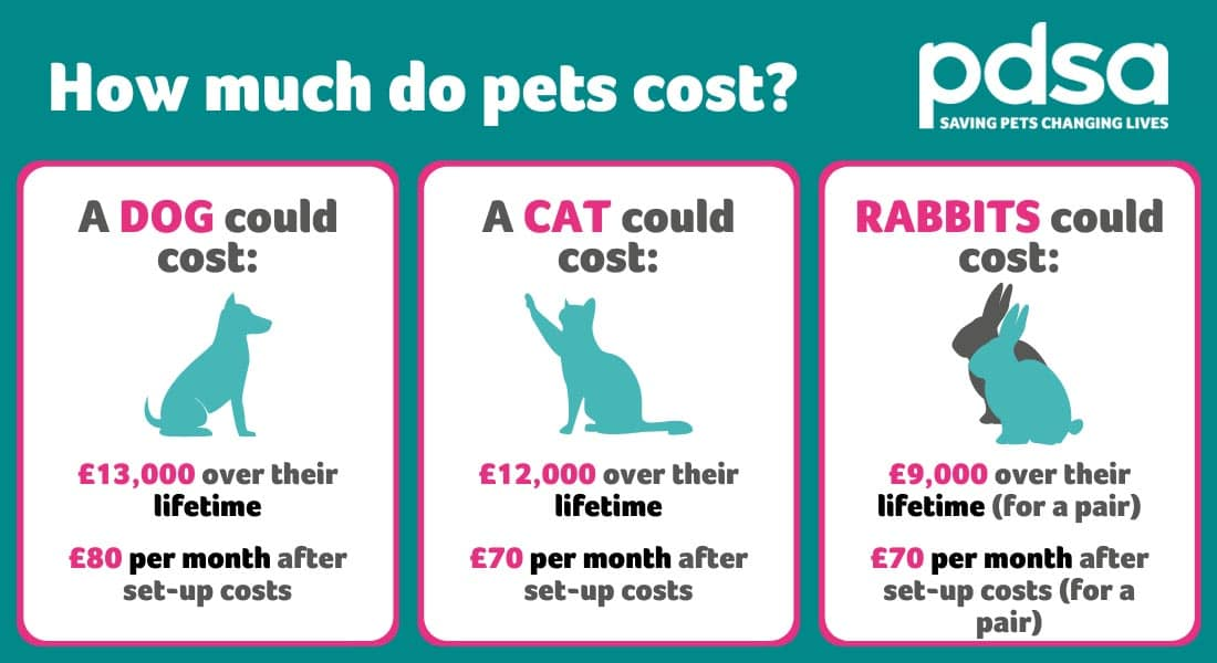 Infographic showing costs of cats, dogs and rabbits