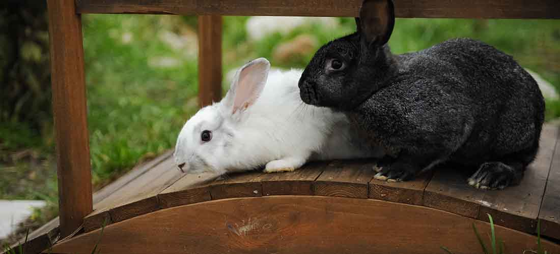 Two rabbits climbing on a bridge